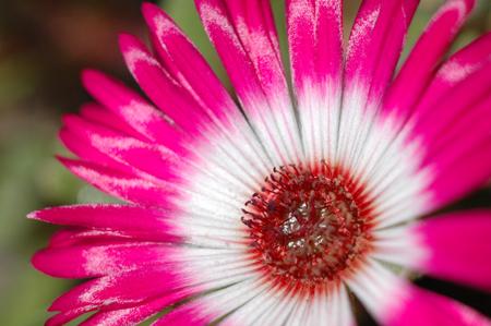 お花・葉っぱ・森林:スタイルアウトドア…森林ライフで楽しみます ... : 綺麗な花の画像 - NAVER まとめ